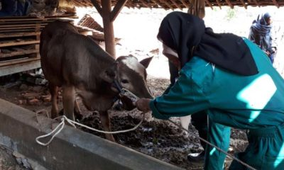 Pemeriksaan kesehatan hewan oleh tim FKH UB. (ist)