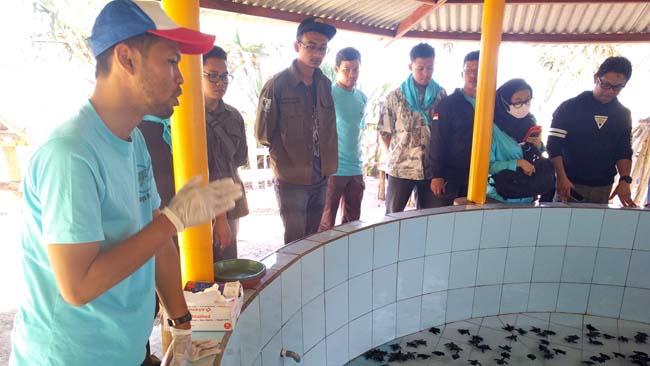 dr. Nofan Rickyawan, menjelaskan kondisi tukik di konservasi penyu BSTC. (rhd)