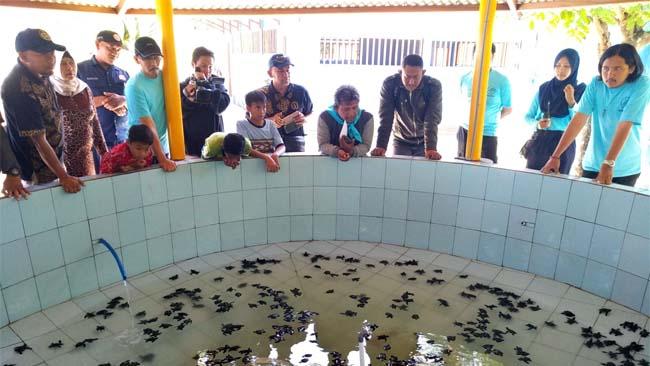 Lindungi Tukik, BSTC Gandeng FKH UB Untuk Konservasi Penyu di Bajul Mati